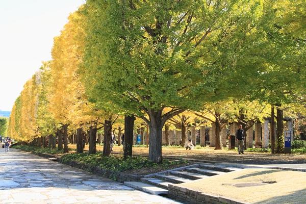 2011_11_16 昭和記念公園  ブログサイズ2011_11_16 昭和記念公園DPP_0072