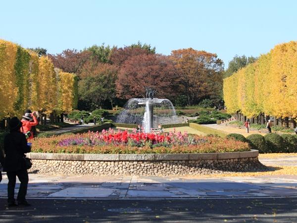 2011_11_16 昭和記念公園  ブログサイズ2011_11_16 昭和記念公園DPP_0005