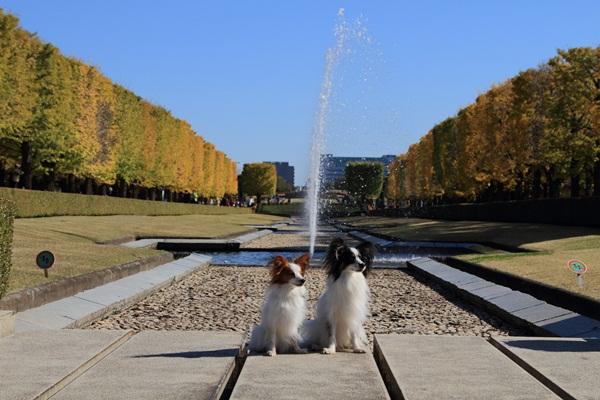 2011_11_16 昭和記念公園  ブログサイズ2011_11_16 昭和記念公園DPP_0070