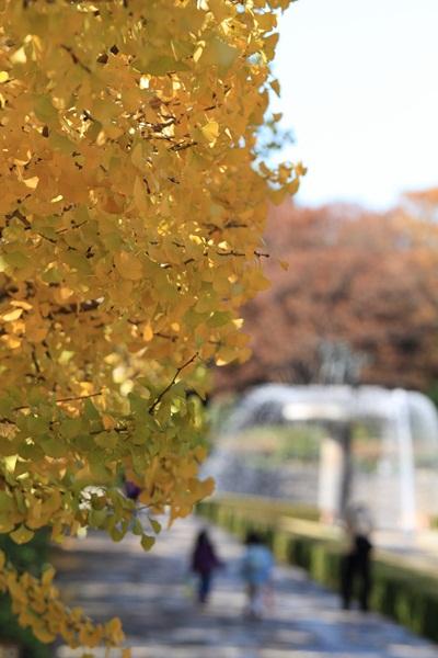 2011_11_16 昭和記念公園  ブログサイズ2011_11_16 昭和記念公園DPP_0013