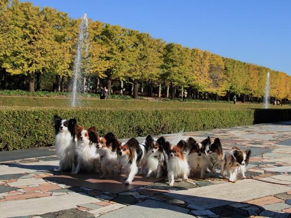 2011_11_16 昭和記念公園  ブログサイズ2011_11_16 昭和記念公園DPP_0052