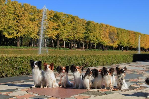 2011_11_16 昭和記念公園  ブログサイズ2011_11_16 昭和記念公園DPP_0051