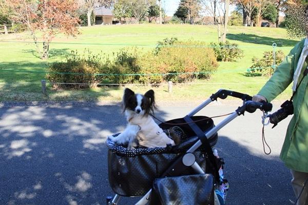 2011_11_16 昭和記念公園  ブログサイズ2011_11_16 昭和記念公園DPP_0079