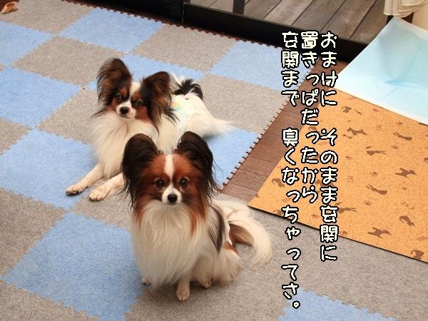 2011_11_15 リビングDPP_0012