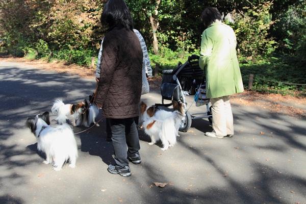 2011_11_16 昭和記念公園  ブログサイズ2011_11_16 昭和記念公園DPP_0078
