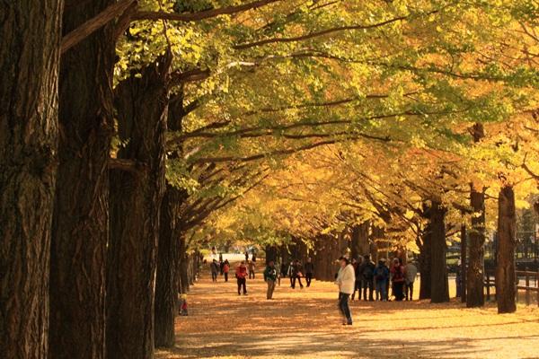 2011_11_16 昭和記念公園  ブログサイズ2011_11_16 昭和記念公園DPP_0155