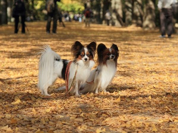 2011_11_16 昭和記念公園  ブログサイズ2011_11_16 昭和記念公園DPP_0131