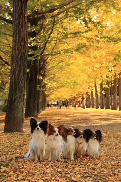 2011_11_16 昭和記念公園  ブログサイズ2011_11_16 昭和記念公園DPP_0140