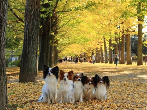 2011_11_16 昭和記念公園  ブログサイズ2011_11_16 昭和記念公園DPP_0138