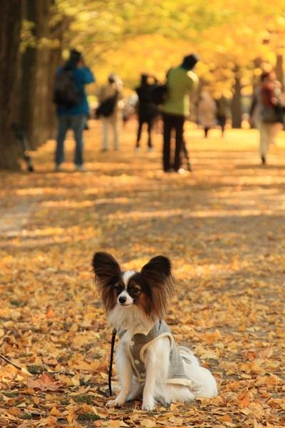 2011_11_16 昭和記念公園  ブログサイズ2011_11_16 昭和記念公園DPP_0147