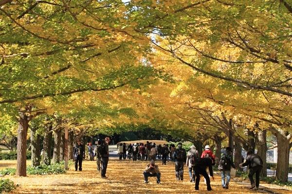 2011_11_16 昭和記念公園  ブログサイズ2011_11_16 昭和記念公園DPP_0043