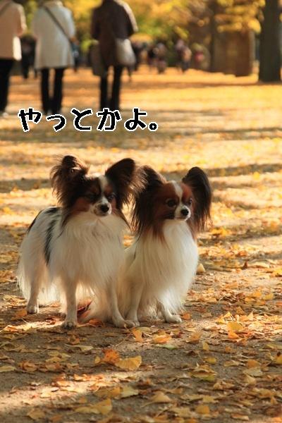 2011_11_16 昭和記念公園  ブログサイズ2011_11_16 昭和記念公園DPP_0151