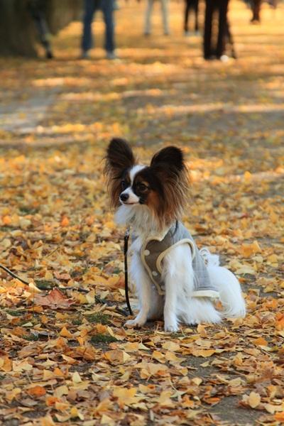 2011_11_16 昭和記念公園  ブログサイズ2011_11_16 昭和記念公園DPP_0144