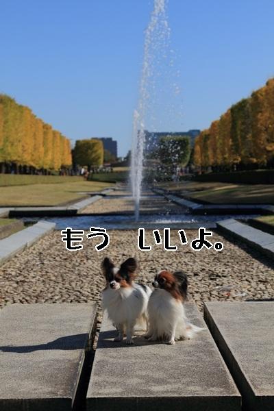 2011_11_16 昭和記念公園  ブログサイズ2011_11_16 昭和記念公園DPP_0056