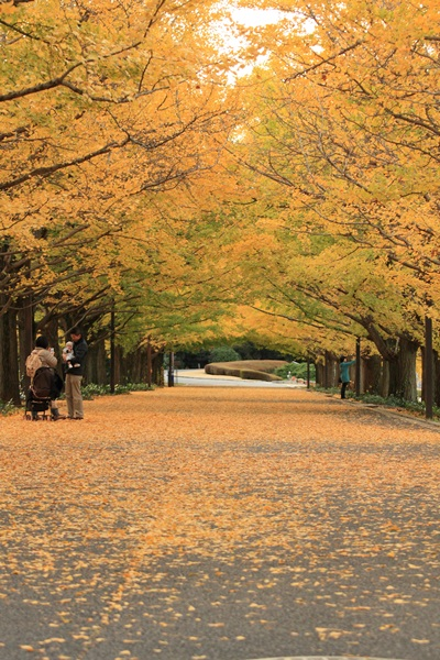 2011_11_16 昭和記念公園  ブログサイズ2011_11_16 昭和記念公園IMG_7214