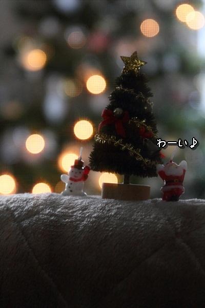 2011_11_24 クリスマスツリーDPP_0002