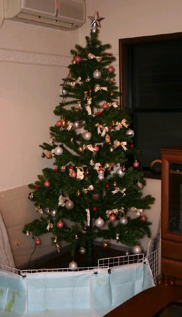 クリスマスツリー2007