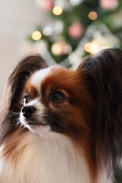 2011_11_25 クリスマスツリーDPP_0035