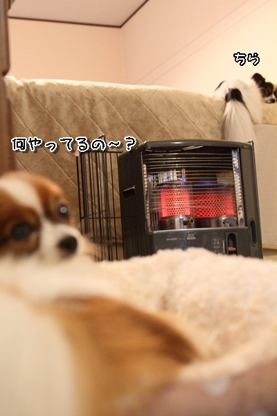 2011_12_01 石油ストーブDPP_0002
