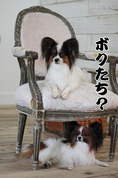 2011_09_12 EOS犬撮影_MG_0773