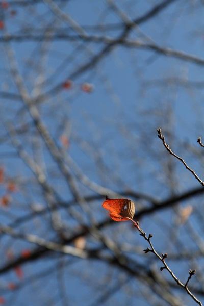 2011_11_25 クリスマスツリーDPP_0065