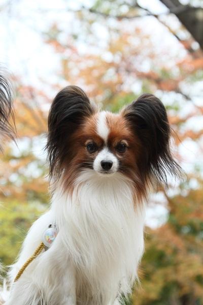 2011_11_28 秋のお散歩DPP_0010