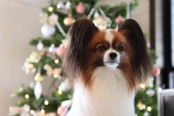 2011_11_25 クリスマスツリーDPP_0013