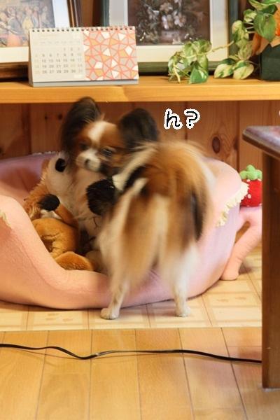 2011_12_07 ふるさと公園IMG_8096