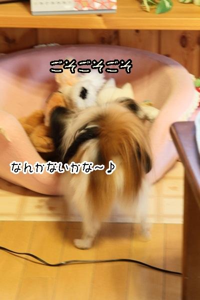 2011_12_07 ふるさと公園IMG_8101