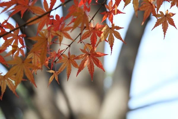 2011_12_07 ふるさと公園DPP_0307