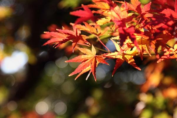 2011_12_04 菅生緑地DPP_0001