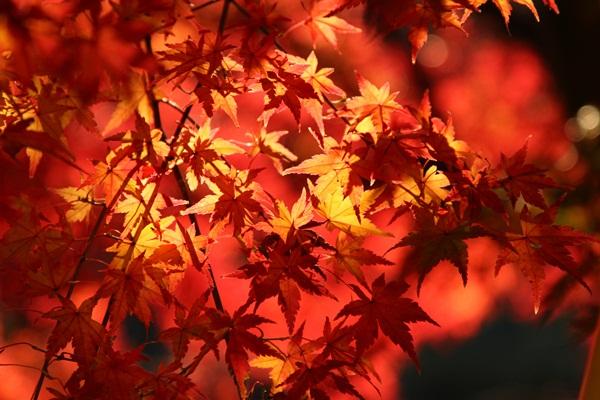 2011_12_04 菅生緑地DPP_0046