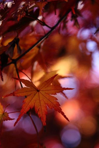 2011_12_04 菅生緑地DPP_0003