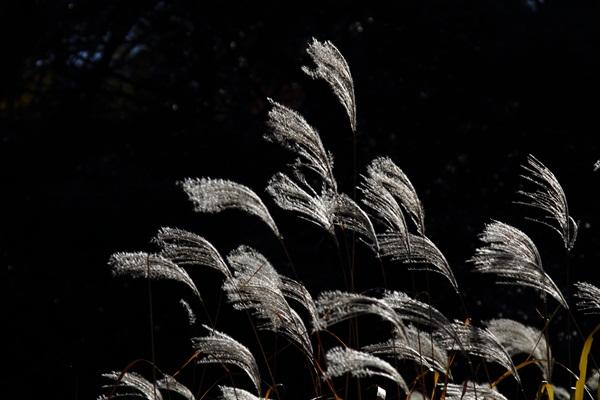 2011_12_13 駒沢公園DPP_0029