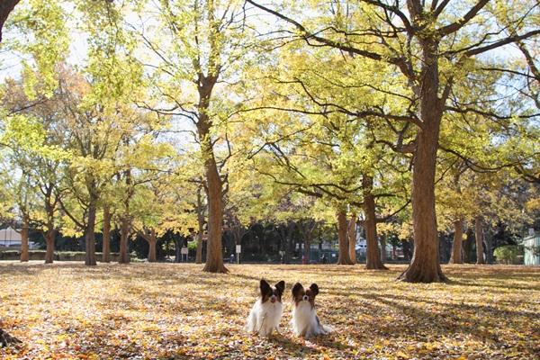 2011_12_13 駒沢公園DPP_0014
