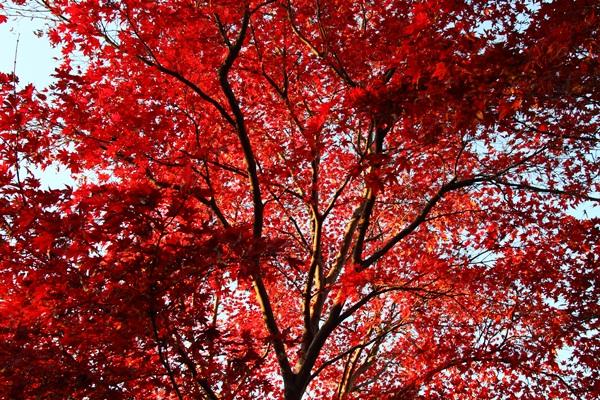 2011_12_04 菅生緑地DPP_0059