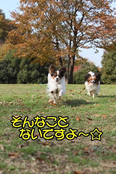 2011_12_07 ふるさと公園DPP_0127