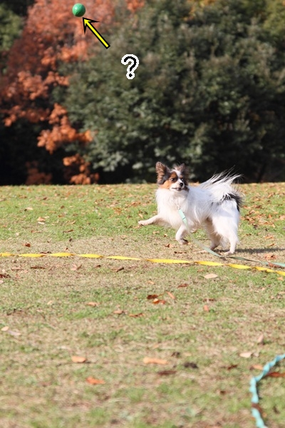 2011_12_07 ふるさと公園DPP_0154