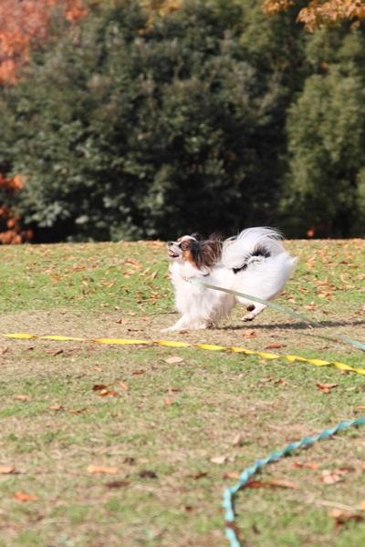 2011_12_07 ふるさと公園DPP_0153