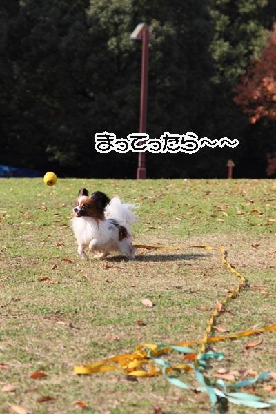2011_12_07 ふるさと公園DPP_0176