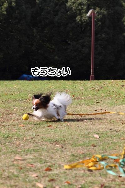 2011_12_07 ふるさと公園DPP_0177