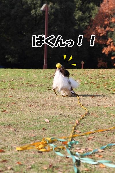 2011_12_07 ふるさと公園DPP_0173