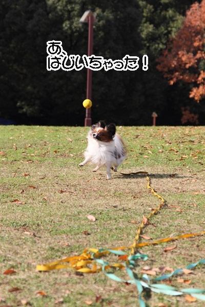 2011_12_07 ふるさと公園DPP_0174