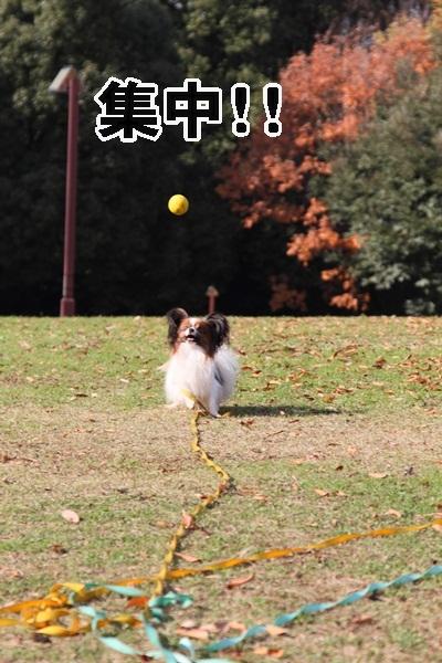 2011_12_07 ふるさと公園DPP_0171