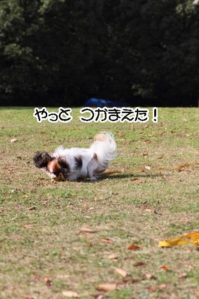 2011_12_07 ふるさと公園DPP_0178