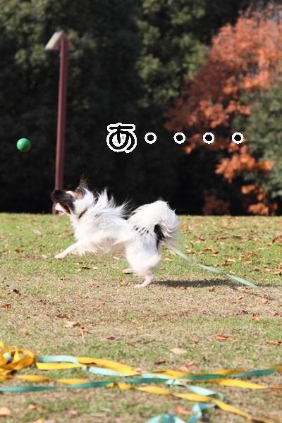 2011_12_07 ふるさと公園DPP_0188