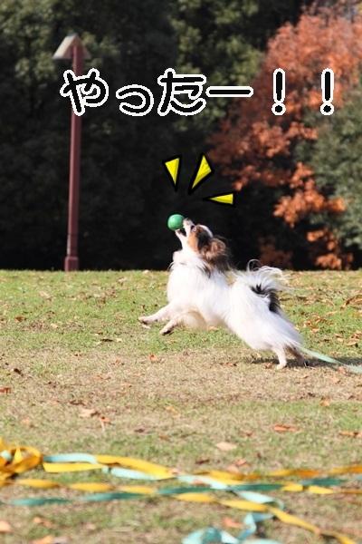 2011_12_07 ふるさと公園DPP_0187
