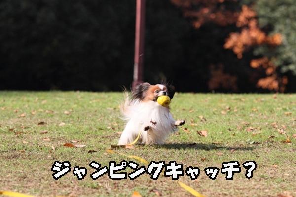 2011_12_07 ふるさと公園DPP_0234