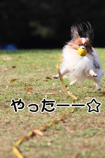 2011_12_07 ふるさと公園DPP_0218