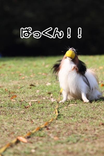 2011_12_07 ふるさと公園DPP_0217